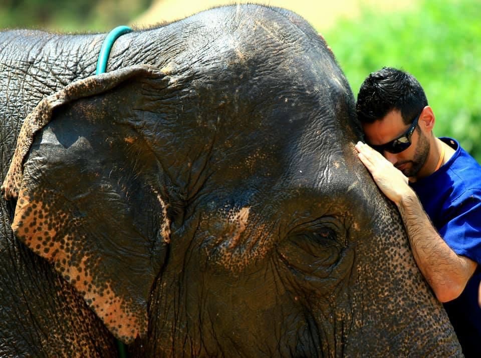 elefante. chiang mai