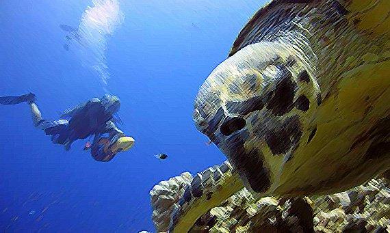 safari marino