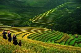 campos vietnam