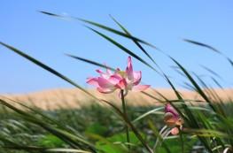 flores vietnam