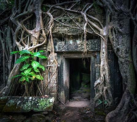 La jungla de Camboya