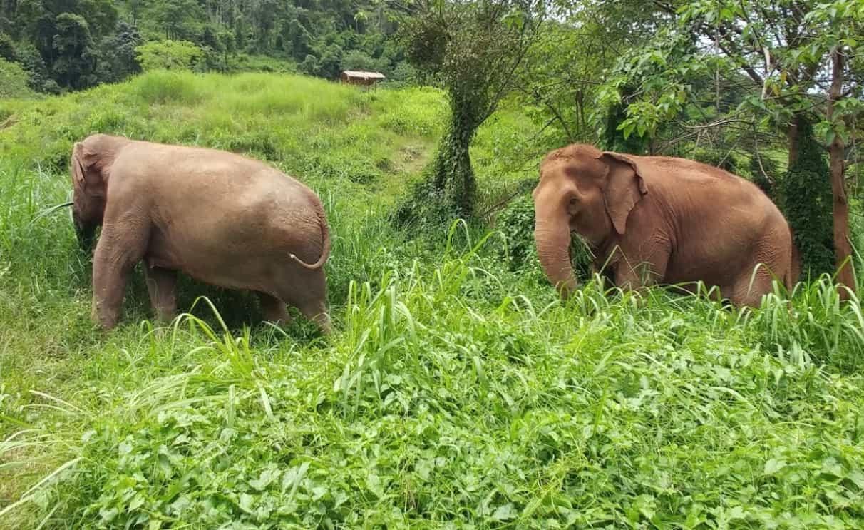 elephant park chiang mai