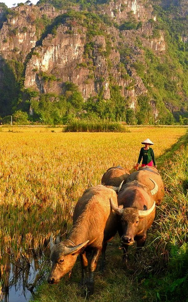 Vietnam Noreste: Ninh Binh, Hoa Lu y Tam Coc