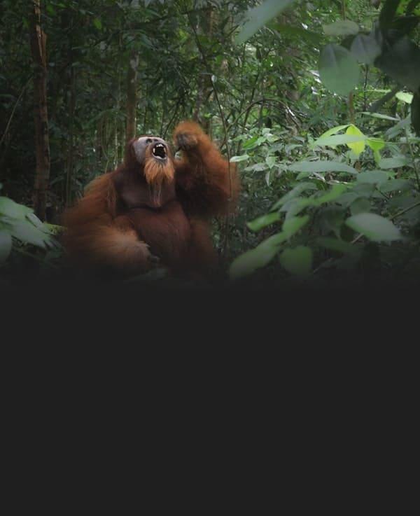 B-Sumatra